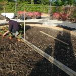 1. plantations du jardin blanc en cours