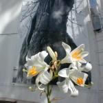 2. floraison des premiers lys du jardin blanc