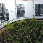 2. plantations du jardin blanc et photos suspendues