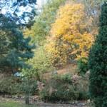 contrastes en automne