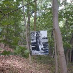 expo dans le bois: des arbres vivants