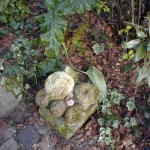 jardin du 62 fevrier 2003 1