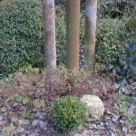 jardin du 62 fevrier 2003 8